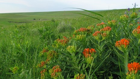 Tall Grass Prairie